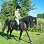 Hayley & her Beautiful Arab Stallion Mehmet in their Comfort Seeker, Flock Panel, Arab Fit.