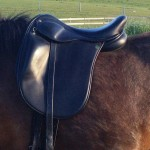 icelandic saddle